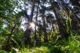 Disfruta de Prat Primer y el Bosc de Palomera