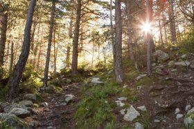 Gaudeix de Prat Primer i el Bosc de Caulla