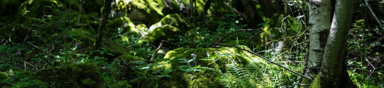 Fes senderisme per la Vall d'Enclar i gaudeix la flora i fauna