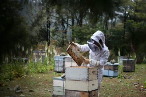 Itineraris Ser apicultor per un dia, tota una experiència