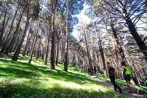Camí del Bosc de Palomera